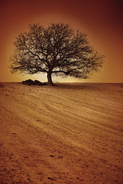 Maria Jose Rivera TREE IN PLOUGHED FIELD Trees/Forest