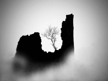 Katarina Ivicevic TREE IN RUIN IN WINTER Trees/Forest