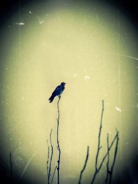 Katarina Ivicevic BIRD SITTING ON TWIG Birds