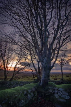 Philip Askew TREES WITH MOSSY WALL AT SUNSET Trees/Forest