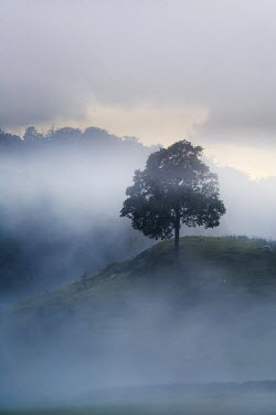 Mark Bauer TREE ON MISTY HILL Rocks/Mountains