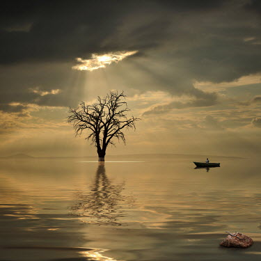 Caras Ionut MAN IN BOAT WITH TREE Men