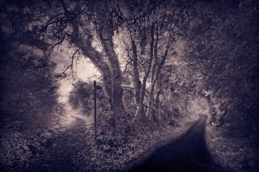 Paul Knight FORKED COUNTRY LANE WITH SIGN Roads