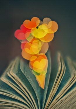Jean Fan HEART-SHAPED LIGHTS IN BOOK Miscellaneous Objects