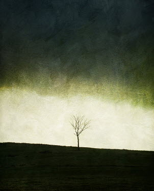 Vincent MacNamara YOUNG TREE IN DESOLATE LANDSCAPE Trees/Forest