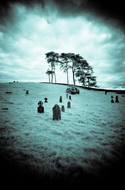 Vincent MacNamara GRAVEYARD IN FIELD WITH TREES Statuary/Gravestones