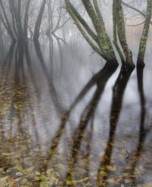 David & Jan Harris TREES REFLECTED IN MISTY RIVER Lakes/Rivers