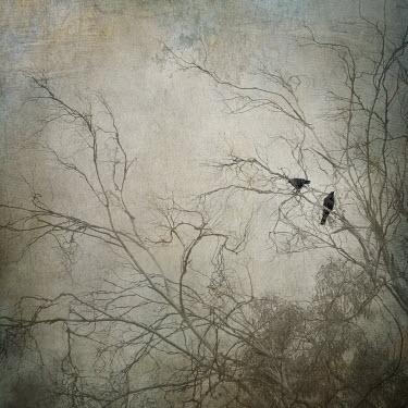 Amy Weiss TWO BIRDS IN WINTRY TREE Birds