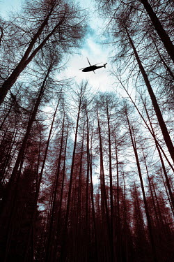 Trevor Payne HELICOPTER FLYING OVER FOREST Miscellaneous Transport