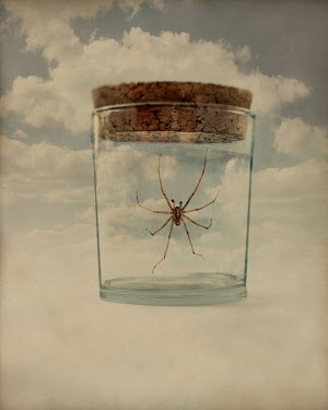 Peter Hatter SPIDER IN GLASS JAR Insects