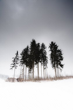 Maren Becker FIR TREES IN SNOWY LANDSCAPE Trees/Forest