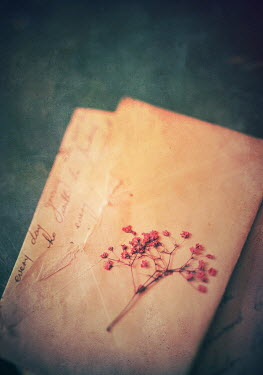 Mark Owen LETTER WITH PINK PRESSED FLOWERS Miscellaneous Objects