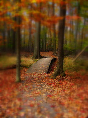 Michelle Anderson AUTUMN TREES WITH WOODEN BRIDGE Trees/Forest