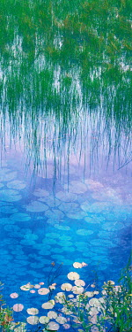 Alexa Garbarino BEAUTIFUL LILY POND WITH GRASS Lakes/Rivers