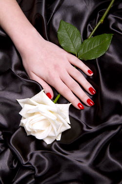 Victor Habbick FEMALE HAND WITH WHITE ROSE Body Detail