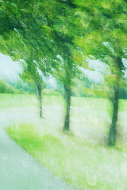 Liz Dalziel PAINTERLY GREEN TREES AND PATH Trees/Forest
