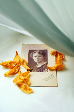 Agnieszka Kielak OLD PHOTOGRAPH WITH ORANGE PETALS Miscellaneous Objects
