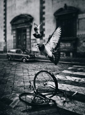 Dragan Todorovic PIGEONS FLUTTERING WITH CRASHED BICYCLE Birds