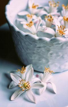 Mashael Hamad AlShuwayer WHITE FLOWERS FLOATING IN BOWL Flowers/Plants