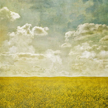 Julianna Collett SUMMERY FIELD WITH YELLOW FLOWERS Fields