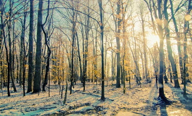 Jean Fan SNOWY FOREST IN SPRING Trees/Forest