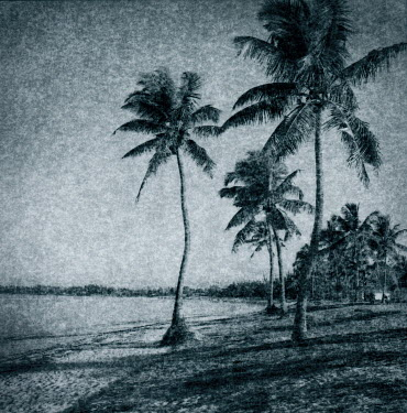 Andrew Sanderson PALM TREES ON BEACH Trees/Forest
