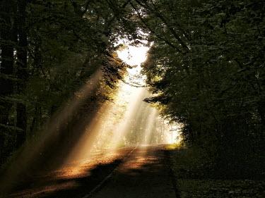 Lars van de Goor SUN LIGHT THROUGH TREES Trees/Forest