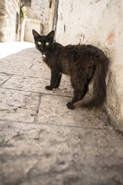 Terry Bidgood CAT IN SUNNY STREET Animals