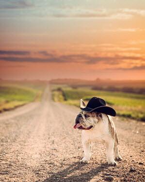 Jake Olson BULLDOG IN COWBOY HAT Animals