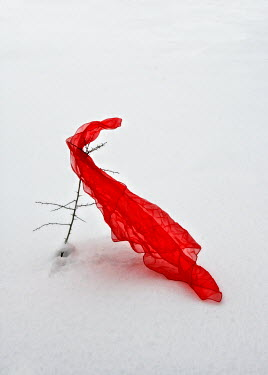 Ilona Wellmann RED SCARF ON BRANCH IN SNOW Miscellaneous Objects