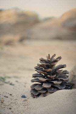 Fernando Arias Ramos PINE CONE IN SAND Miscellaneous Objects