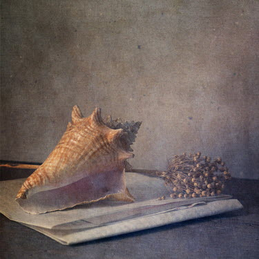 Paul Grand STILL LIFE WITH SHELL AND PLANT Miscellaneous Objects