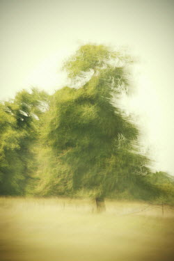 Liz Dalziel PAINTERLY TREE IN SUMMER Trees/Forest