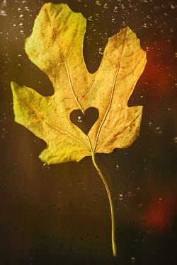 Sanja Kulusic LEAF WITH HEART Miscellaneous Objects