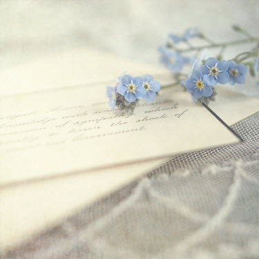 Jill Ferry FORGET-ME-NOTS AND CARDS Miscellaneous Objects