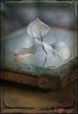 Jill Ferry FLOWER ON FRAME Flowers