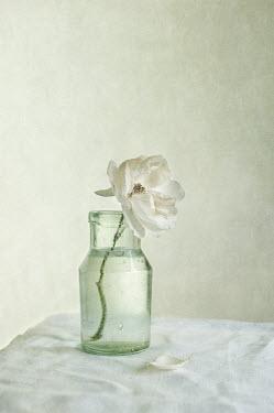 Jill Ferry FLOWER IN GLASS BOTTLE Flowers