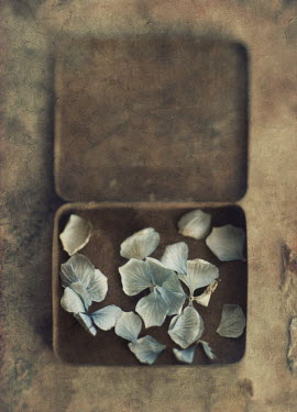 Jill Ferry PETALS IN A RUSTY TIN Miscellaneous Objects