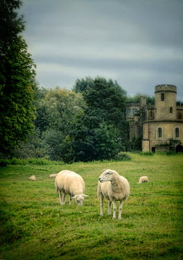 Jill Battaglia SHEEP GRAZING BY CASTLE Animals