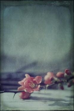 Jill Ferry PINK FLOWERS ON STEM Flowers