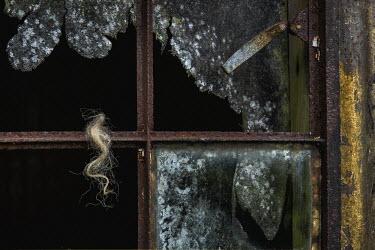 John Race HAIR ON RUSTY WINDOW FRAME Miscellaneous Objects