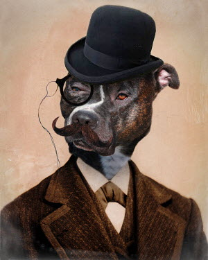 Lisa Howarth PIT BULL GENTLEMAN Birds