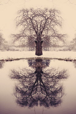 Sarah Louise Johnson TREE AND LAKE IN WINTER Trees/Forest