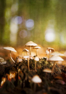 Peter Chadwick MUSHROOMS IN SOIL Flowers/Plants