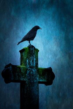 Peter Chadwick BIRD ON CROSS GRAVESTONE Statuary/Gravestones