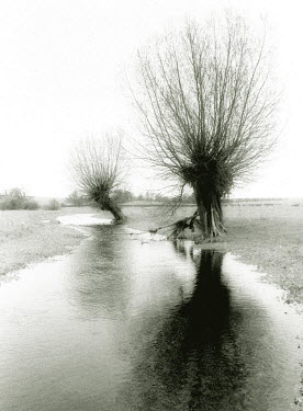 Michael Trevillion TREES IN FLOODED FIELD Trees/Forest