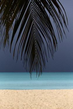 Trevor Payne PALM LEAF WITH BEACH AND OCEAN Seascapes/Beaches