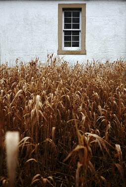 Andy & Michelle Kerry WINDOW WITH WHEAT CROP SURROUNDING Building Detail