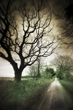 Adrian Muttitt TREE LINED COUNTRY ROAD Paths/Tracks