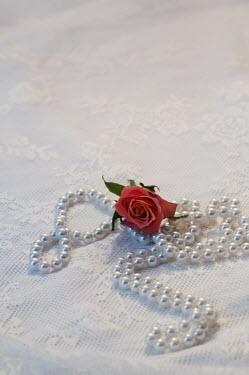 Carmen Spitznagel ROSE AND PEARL NECKLACE ON LACE Miscellaneous Objects